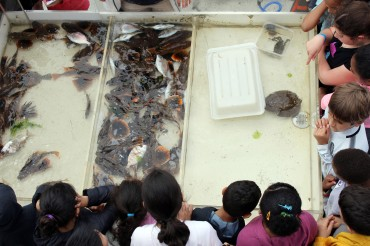 Two third-grade classrooms from Brookside Elementary School went on a marine life study cruise with Maritime Aquarium on Friday, June 1, 2018.