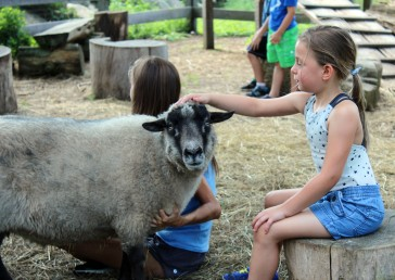 "Ayla Ciano-Buckley pets a goat at Ambler Farm during its summer program, ""Adventures at the Farm, on Wednesday, July 12, 2017."