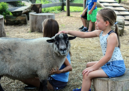 """Ayla Ciano-Buckley pets a goat at Ambler Farm during its summer program, """"Adventures at the Farm, on Wednesday, July 12, 2017."""